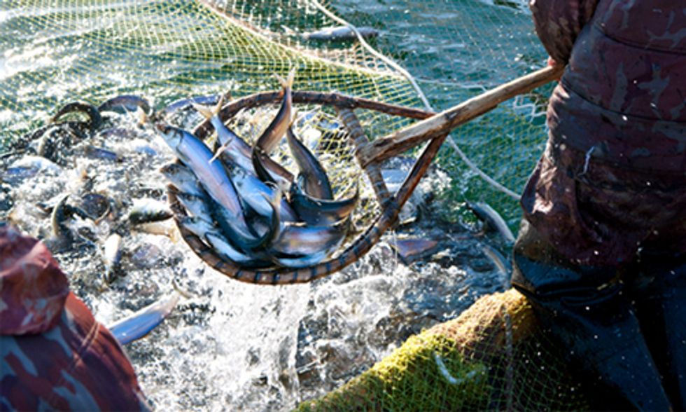 Enjoy Seafood While You Can: Commercial Fisheries Likely to Collapse by 2048