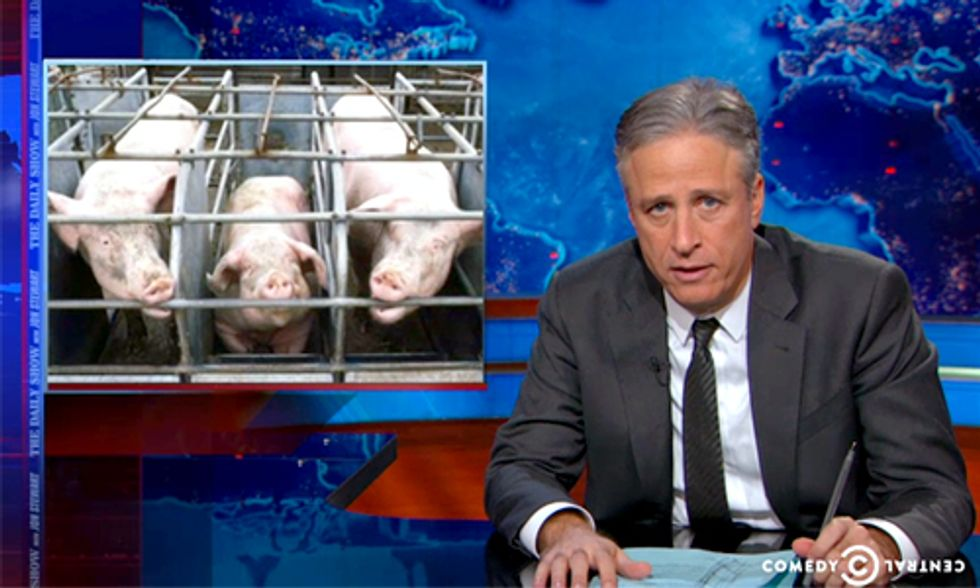 Jon Stewart: Honestly Governor Christie, 'Let the [Pregnant] Pigs Turn Around'
