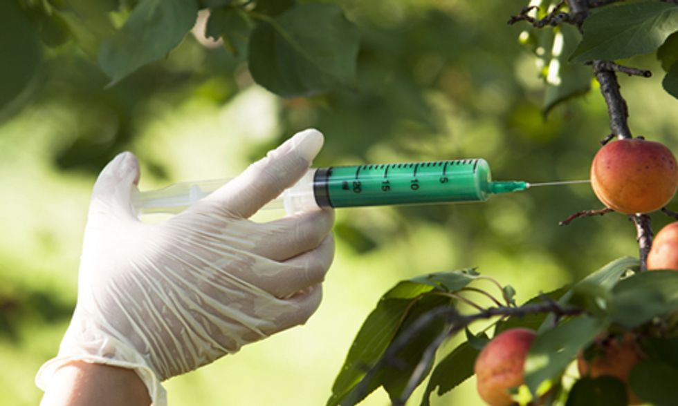 4 Common GMO Claims Debunked
