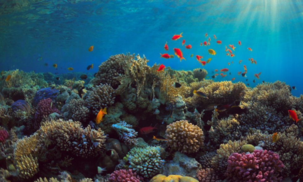 Will New Relations With Cuba Impact Its Pristine Ocean Environment?