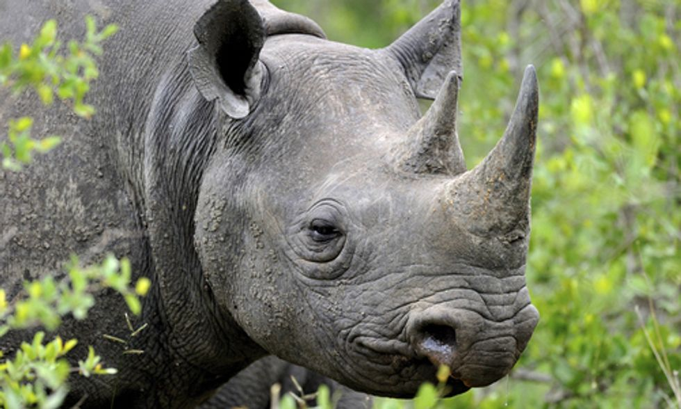 Can Drones Stop Poaching and Save Rhinos and Elephants?