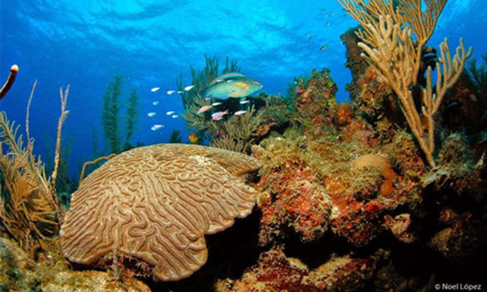 Will Normalized Relations With Cuba Help Restore Florida's Coral Reefs?
