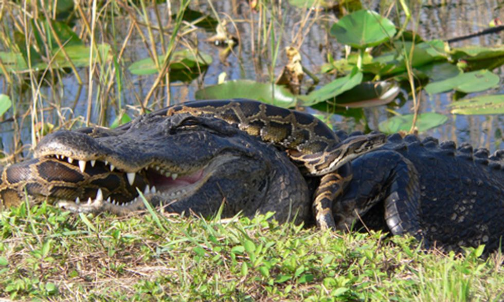 Can the Everglades Be Restored?