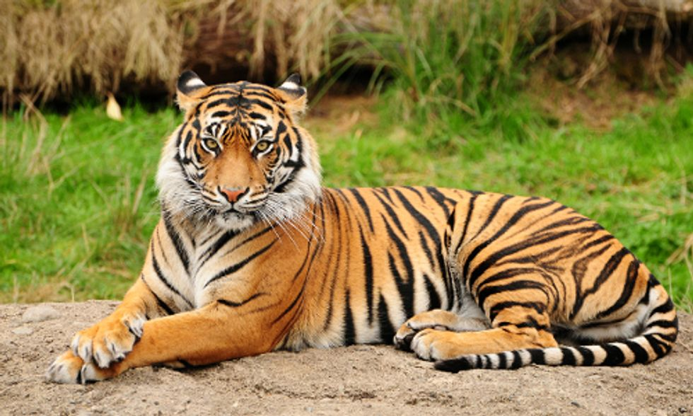 10 Animal Species That Could Vanish in 2015 if We Don't Act Now