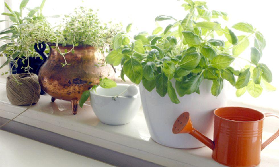How to Create Your Indoor Edible Garden