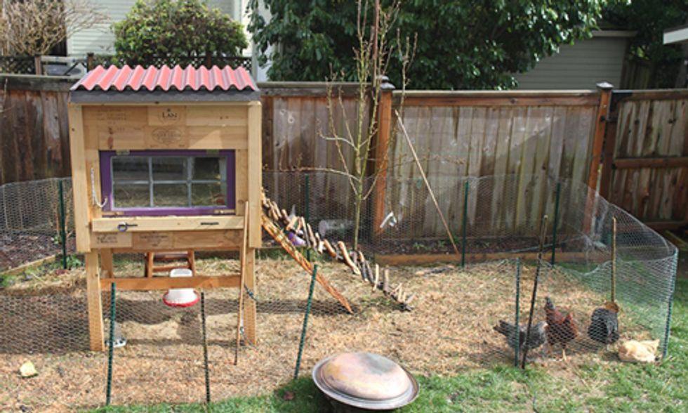 10 Tips on Raising Backyard Chickens