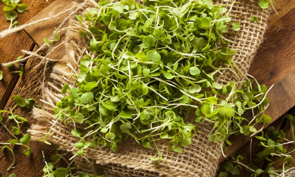 Why Microgreens Should Be Part of Your Daily Superfood Diet