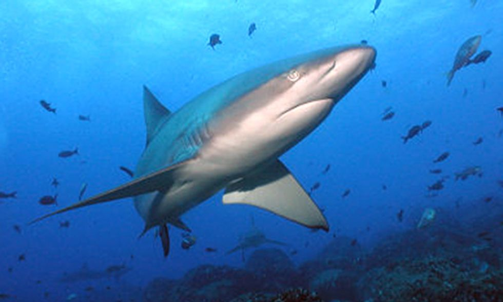 3 Reasons Humans Are to Blame for Hysteria Over Sharks
