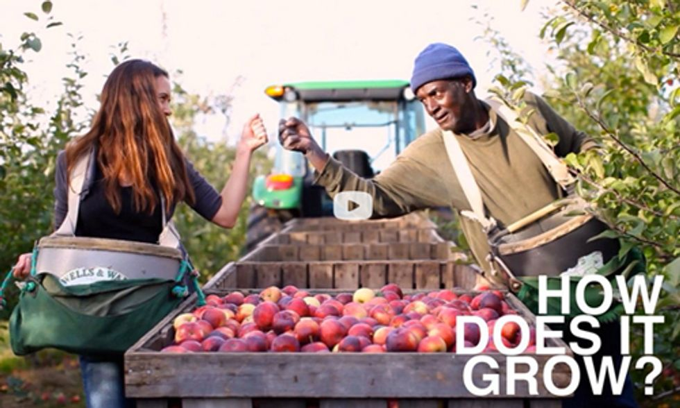 From Field to Fork: How Do Apples Grow?