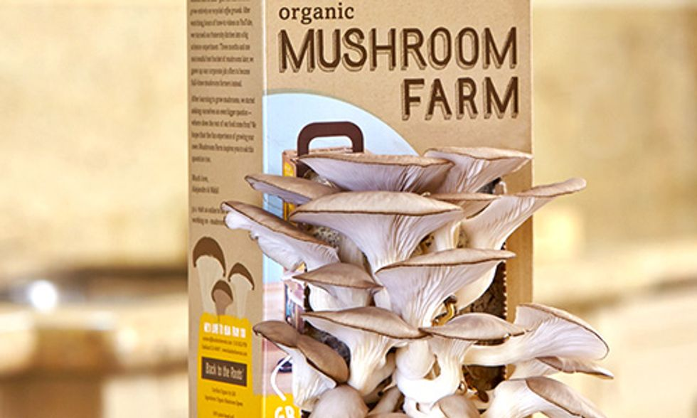 Why You Should Grow Mushrooms on Your Desk