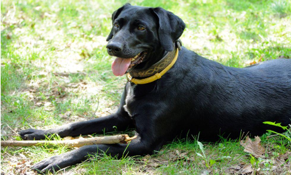 7 Natural Ways to De-Flea Your Dog