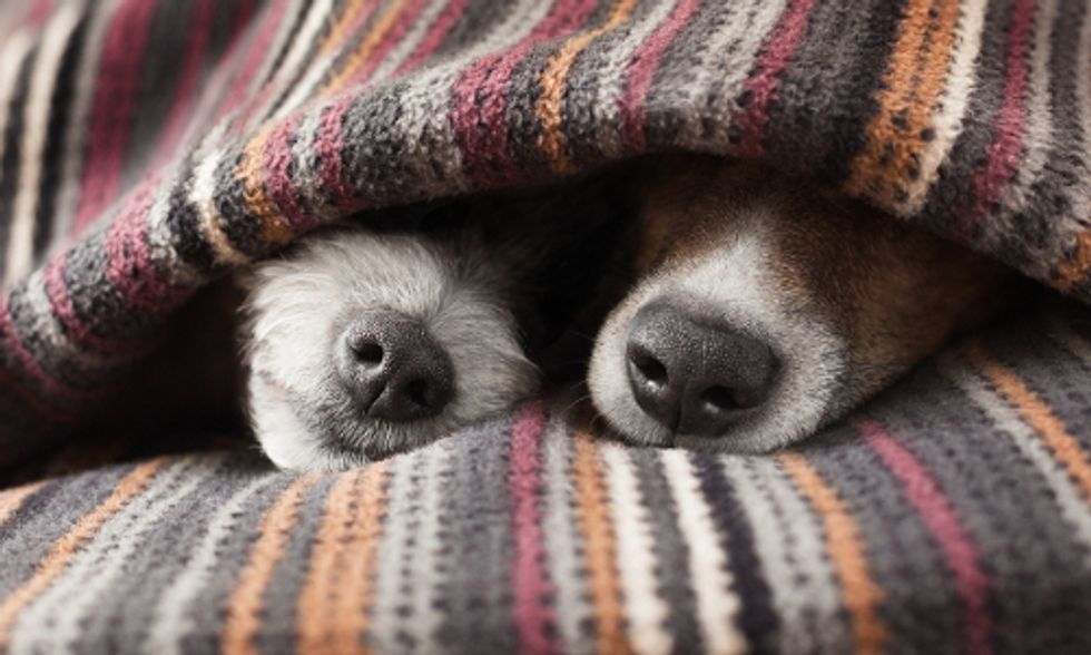 8 Ways To Keep Your Pet Safe and Healthy This Winter
