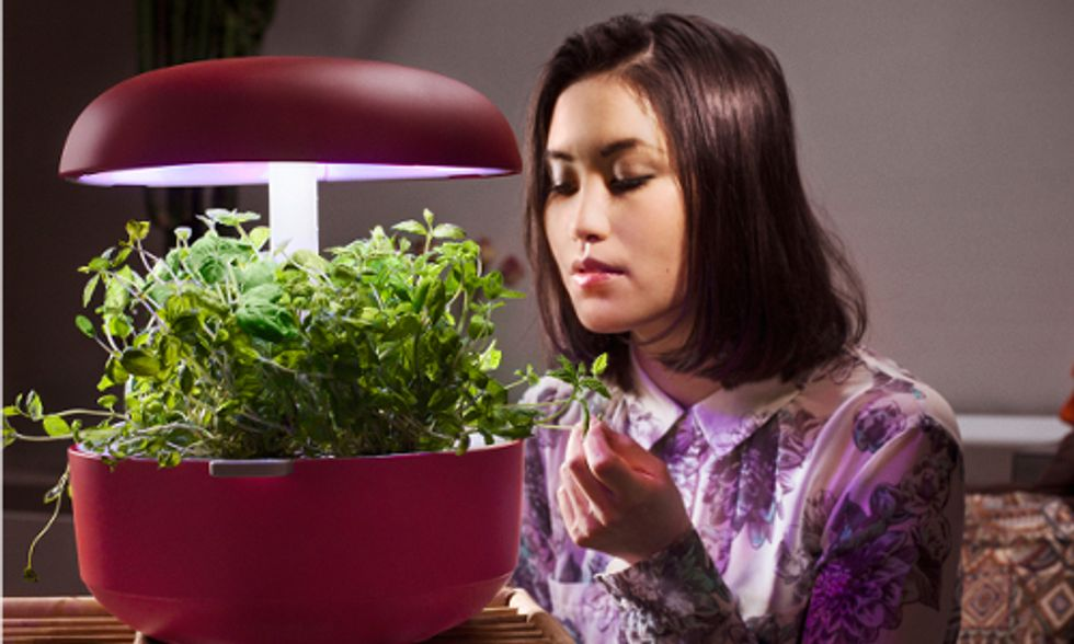 Hydroponic Planter Makes It Easy to Grow Your Own Indoor Edible Garden