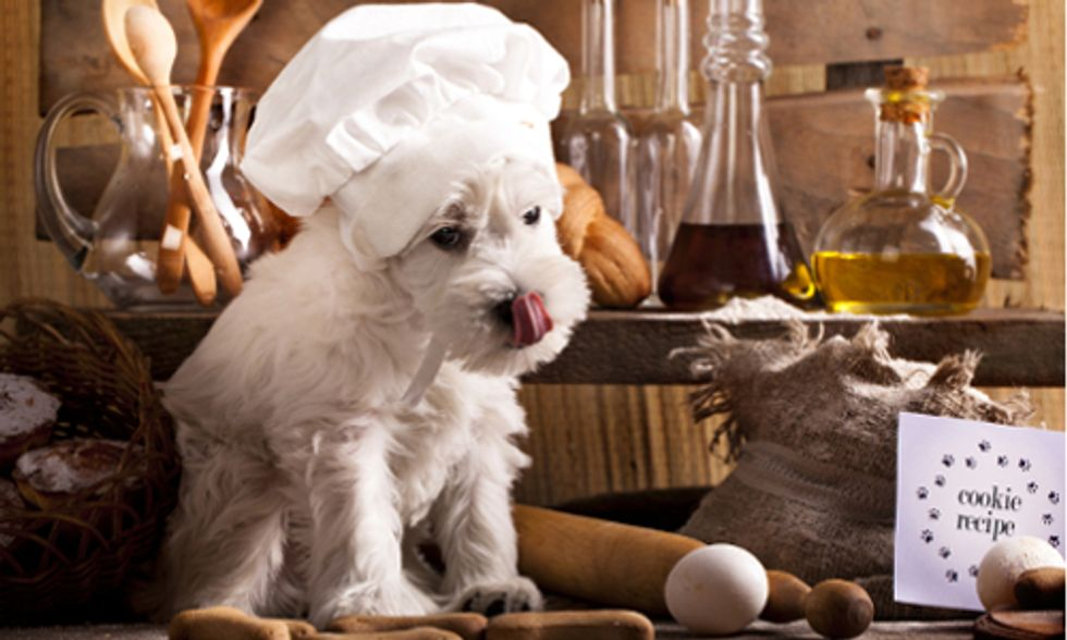 What's the Healthiest All-Natural Diet for Your Dog?