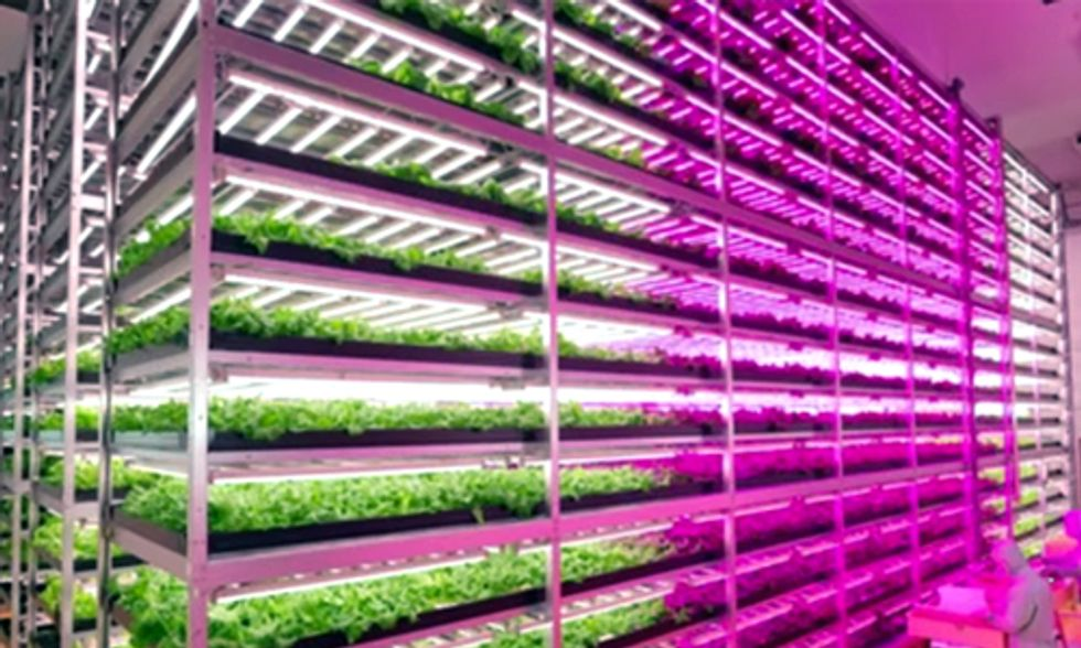 World's Largest 'Vegetable Factory' Revolutionizes Indoor Farming