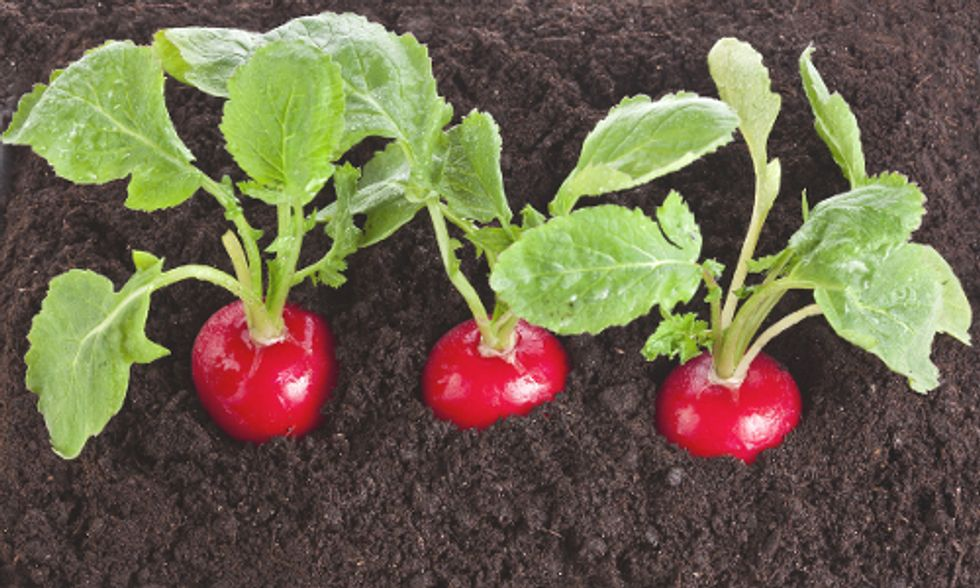 7 Edible Plants You Wouldn't Think You Could Grow Inside in the Winter