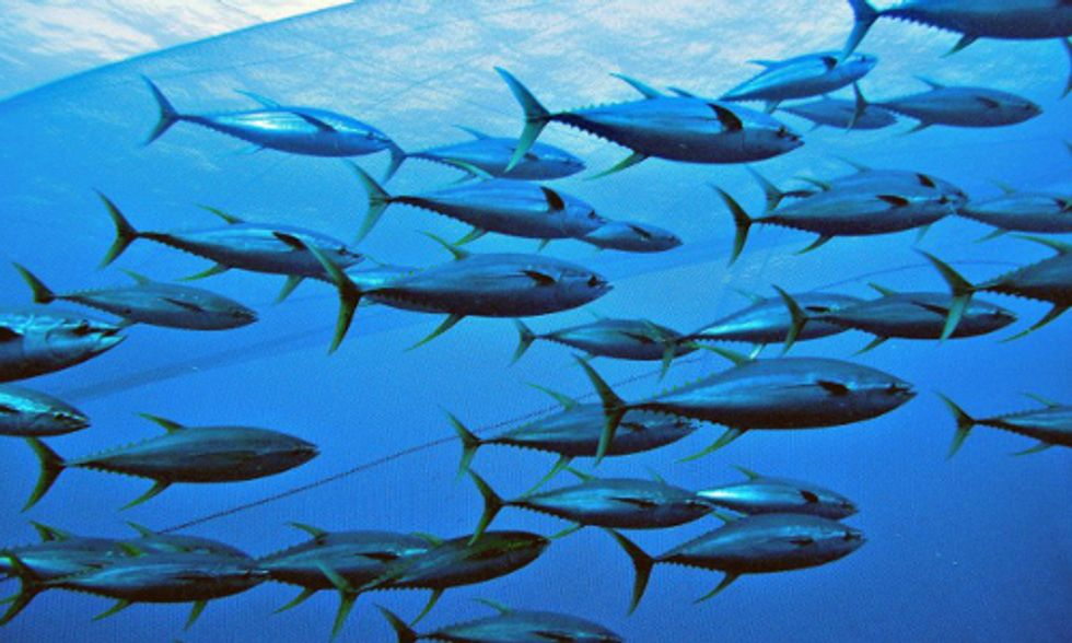 What to Consider When Buying a Can of Tuna