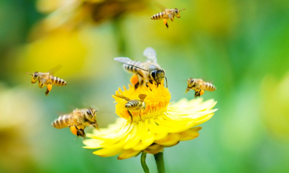 Global Ban on Bee-Killing Neonics Needed Now