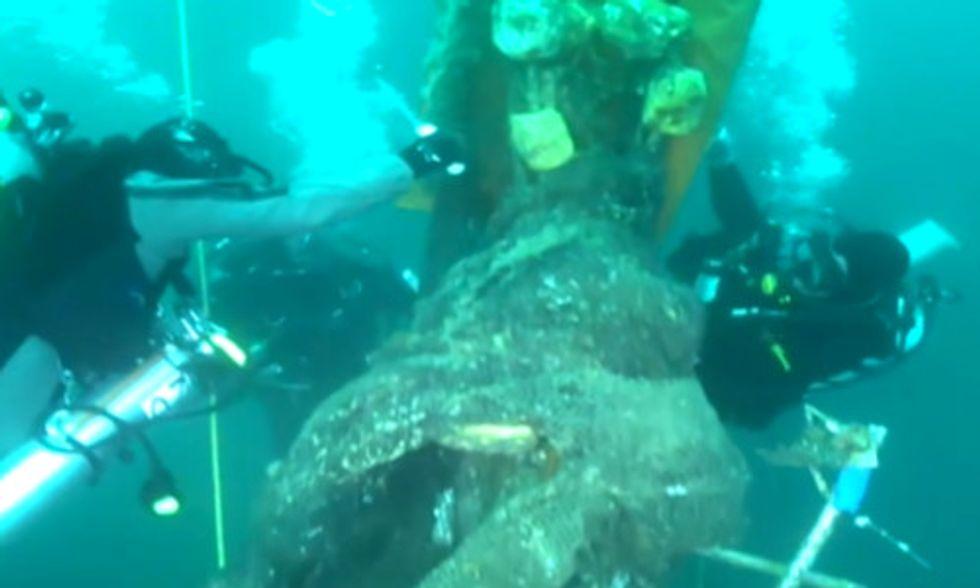 Undersea Superheroes Save Imperiled Marine Life