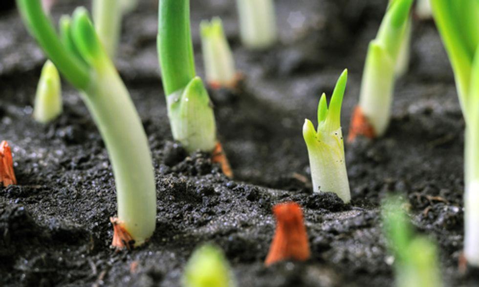 Vandana Shiva: 'All Life Depends on Soil'