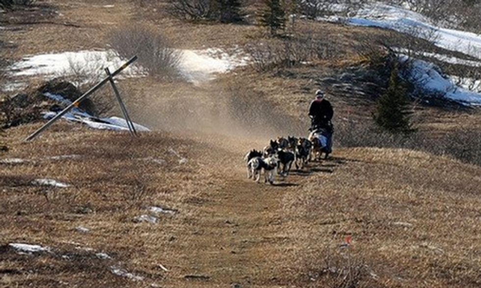 Legendary Iditarod Sled Dog Race Moved North As Alaska Deals With Climate Change