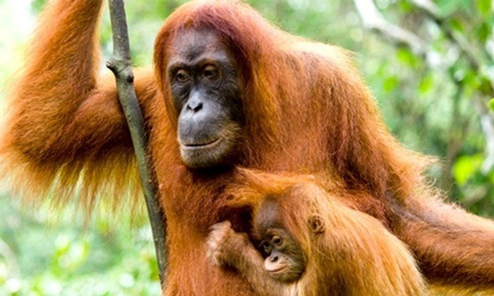 Starbucks, Wake Up and Smell the Coffee: Palm Oil Is Destroying Our Planet