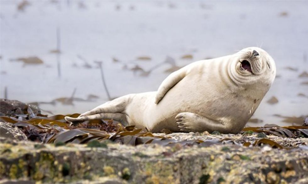 13 Winning Images From First-Ever Comedy Wildlife Photography Contest