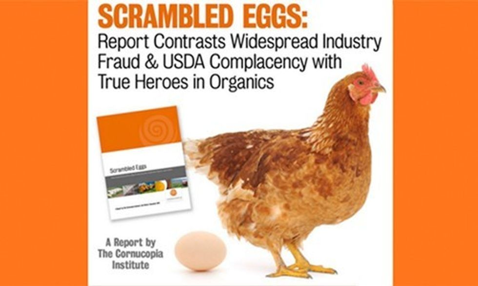 Find Out if Your Eggs Are Truly Organic and Support Local Farms