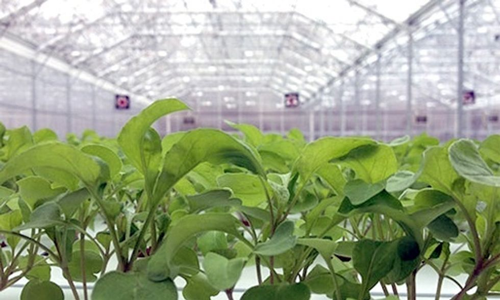 Greenhouses: The Solution for Year-Round Local Food?