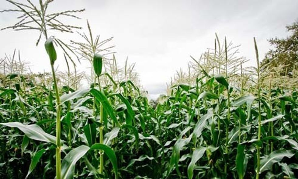 Organic Farmers Win GMO Fight in Jackson County, Oregon