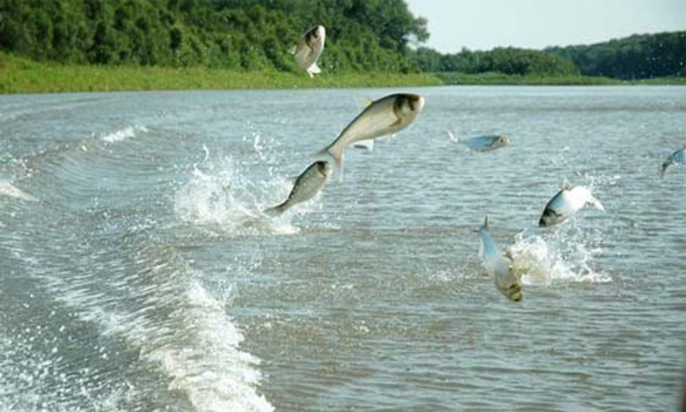 Groundbreaking Study Says Asian Carp Could Make Up One-Third of Lake Erie Biomass