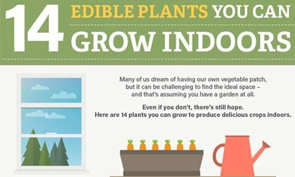 14 Edible Plants You Can Grow Indoors