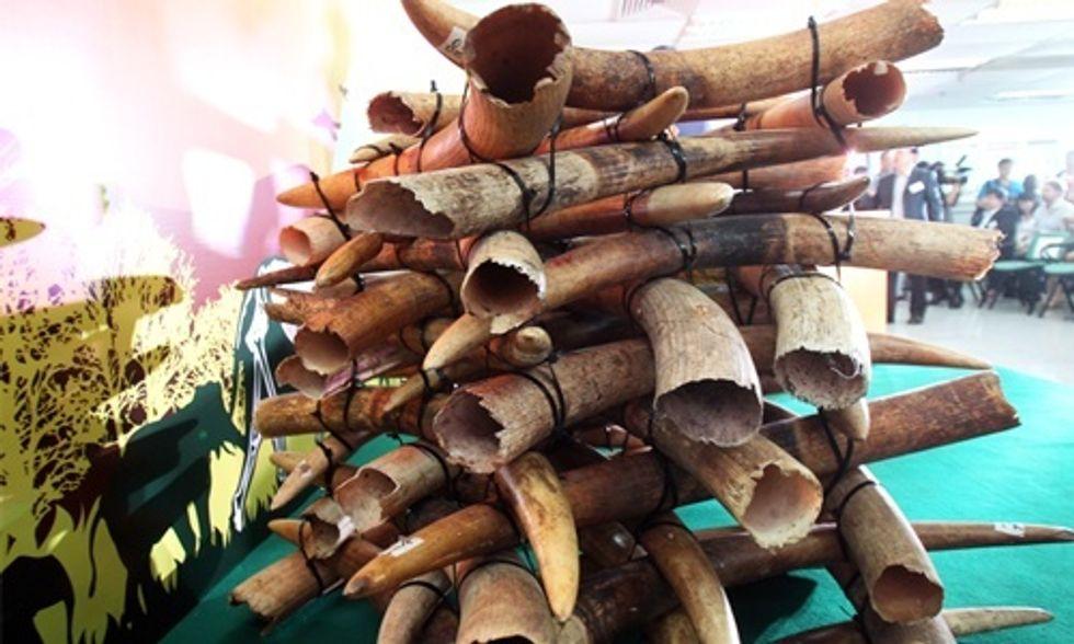 Huge Victory for Elephants: Hong Kong Bans Ivory Trade