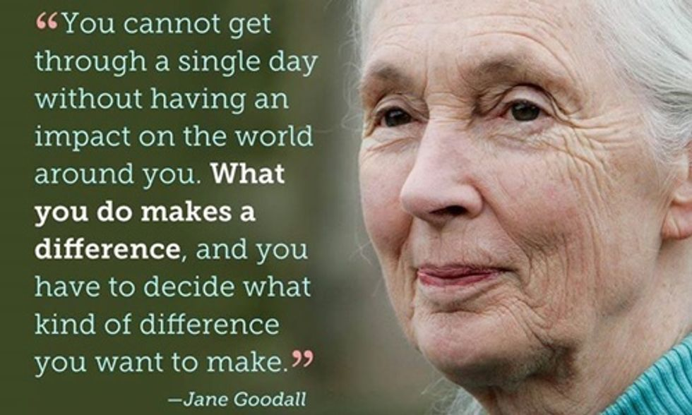 Jane Goodall: Power of Corporations Is Destroying World's Rainforests