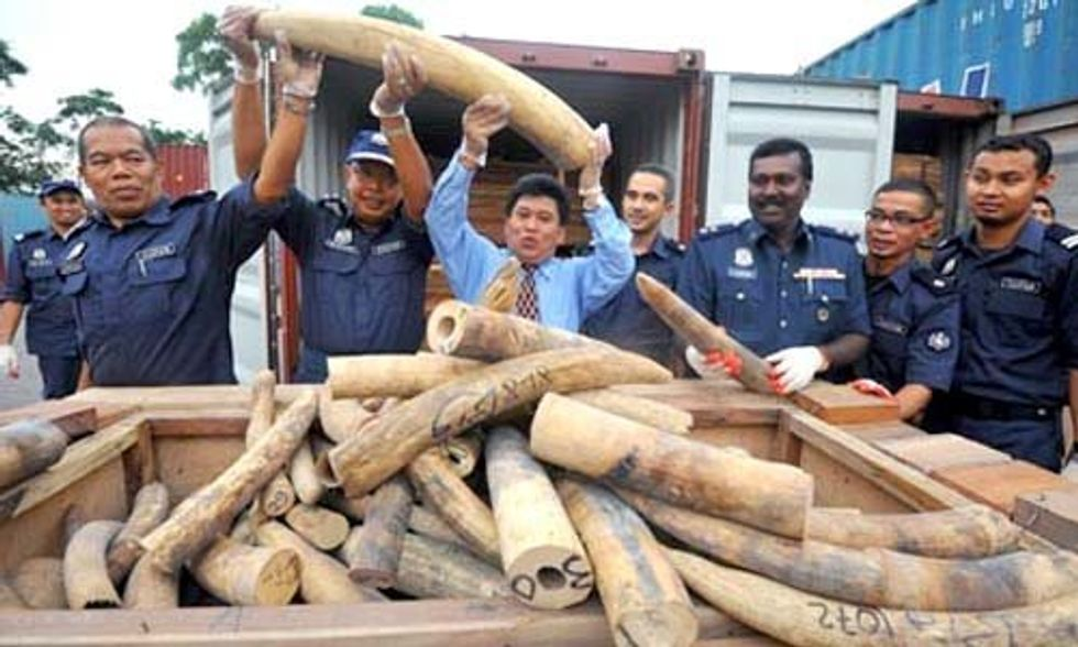 Sri Lanka Is First Country in the World to Apologize for Its Role in Illegal Ivory Trade