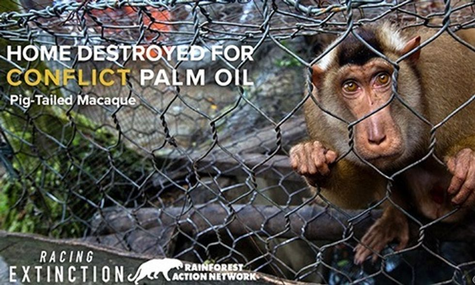 Palm Oil Industry Is Destroying Habitat of Critically Endangered Animals: Find Out How You Can Help