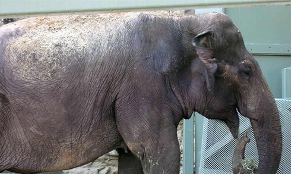 Judge Says Lawsuit Can Move Forward for Lucky the Elephant Who Was Captured From the Wild 53 Years Ago