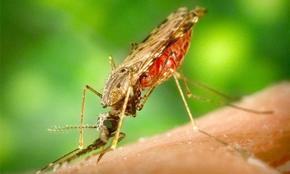 14 Cases to 4 Million: 10 Things You Should Know About Zika Virus
