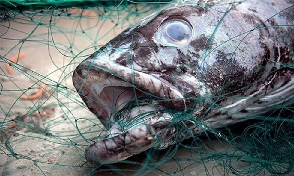 Illegal Chilean Sea Bass Fishing Could Be Coming to an End, Thanks to Sea Shepherd