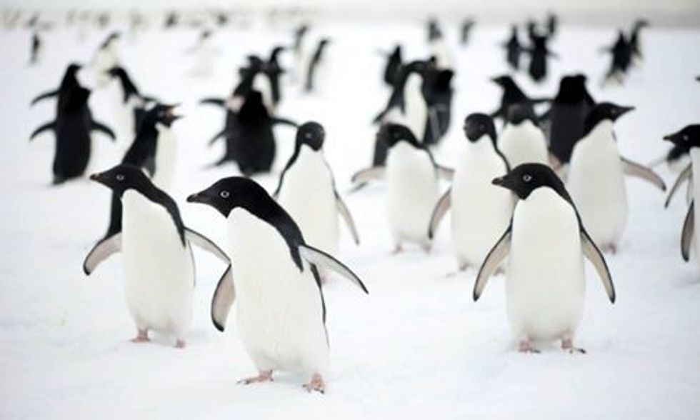 150,000 Penguins Die After Huge Iceberg Blocks Route to Sea