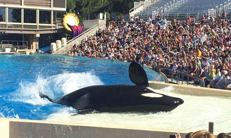 Another Animal Dies at SeaWorld Bringing Death Toll to 4 Large Mammals in Just 4 Months