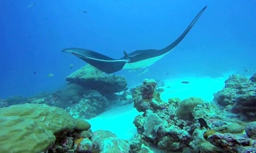 Sustainability Management in Practice: Student Work Helps Establish Conservation Act in Palau