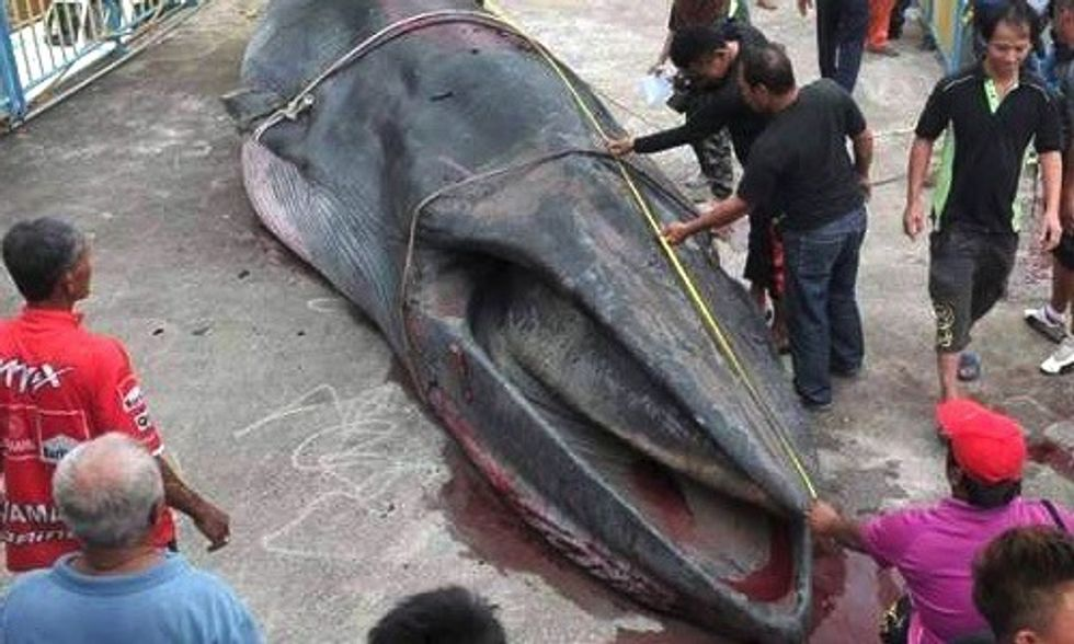 Whale Found Dead With Small Pieces of Plastic Garbage in Its Stomach