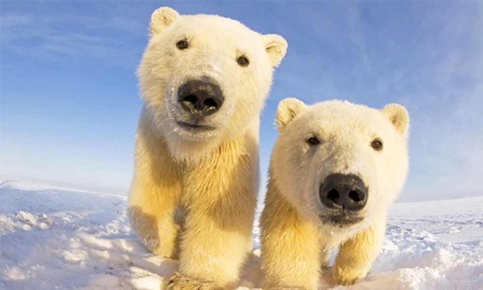 Victory: Alaska's Polar Bears Win Their Day in Court