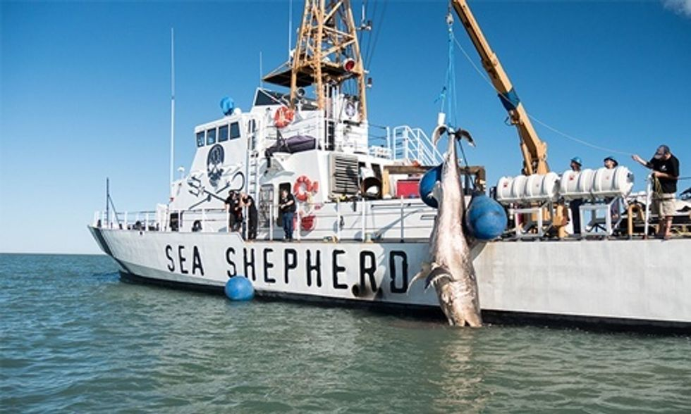 Endangered Species Found Dead, Likely Result of Illegal Fishing