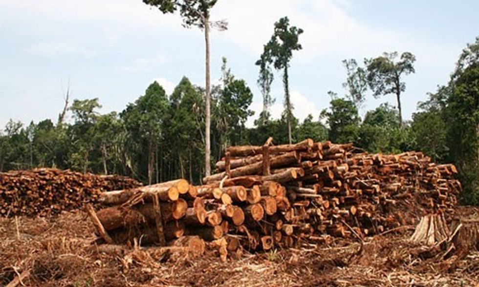 3 Ways the Marketplace Could End Rainforest Deforestation