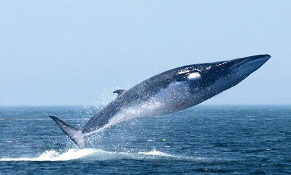 How You Can Help Save the Whales by Eating the Right Fish