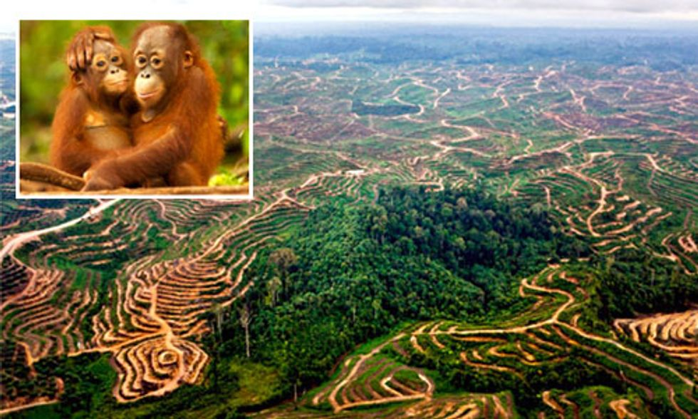 Palm Oil Scorecard: Find Out Which Brands Are (and aren't) Helping Save Indonesia's Rainforests