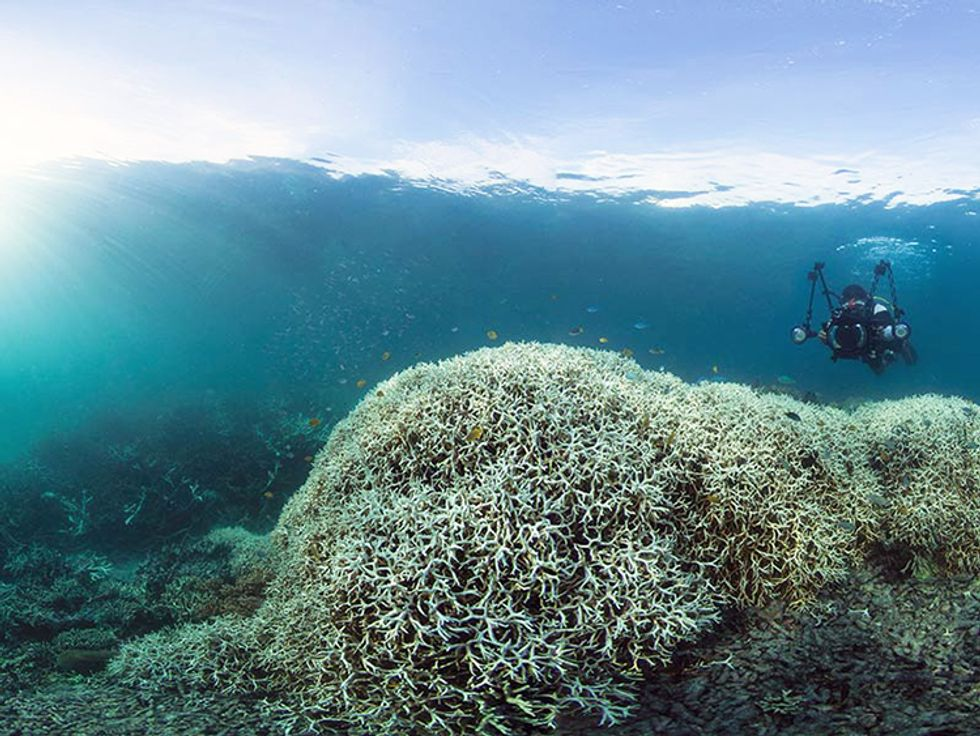 Dramatic Images Show Worst Coral Bleaching Event To Ever Hit