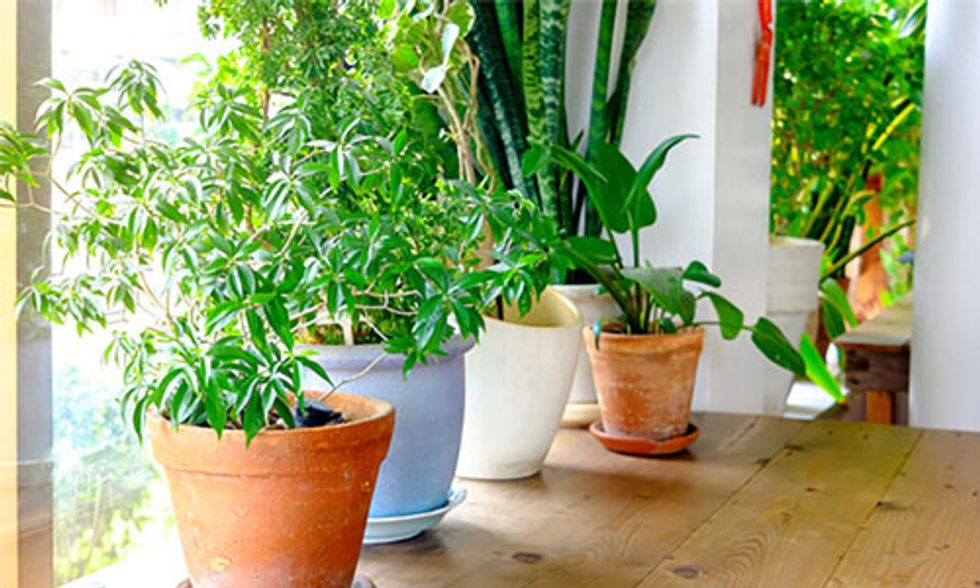 5 Common Houseplants That Clean the Air for a Healthier Home
